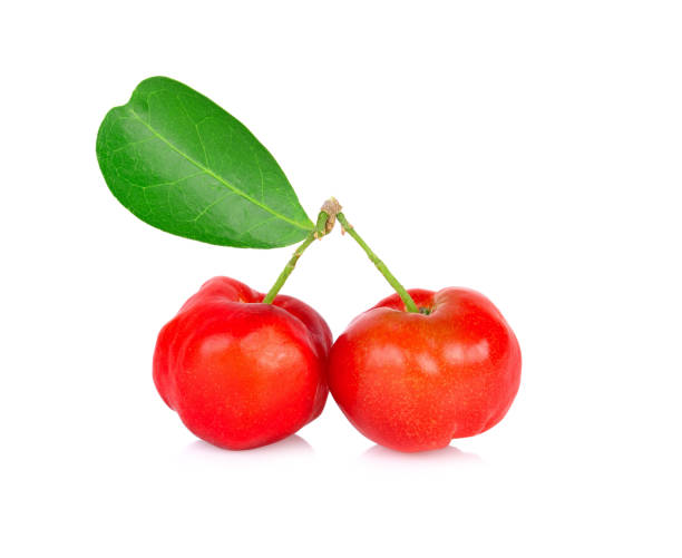 Barbados cherry, Malpighia emarginata, from central of Thailand. stock photo