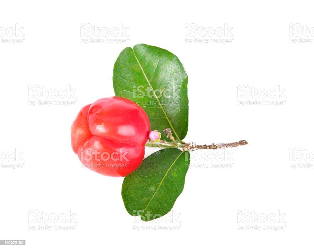 Barbados cherry, Malpighia emarginata, from central of Thailand stock photo