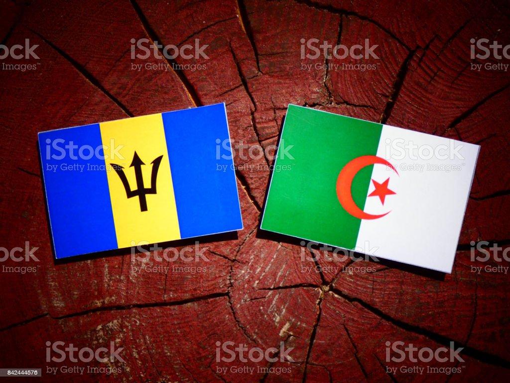 Barbados flag with Algerian flag on a tree stump isolated stock photo