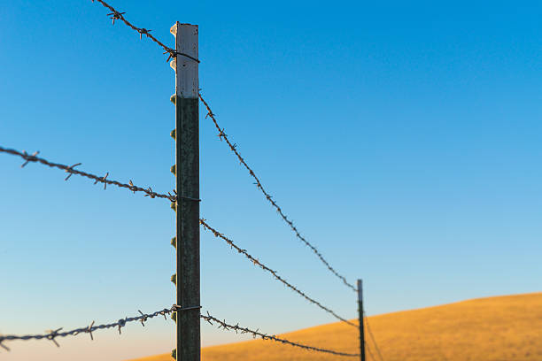 Barbed Fence Over Golden Hill stock photo
