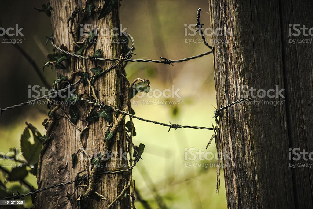 Barbed wire and nature royalty-free stock photo
