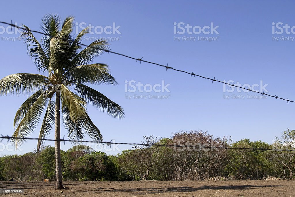 Barbed wire at border field, Mexico stock photo