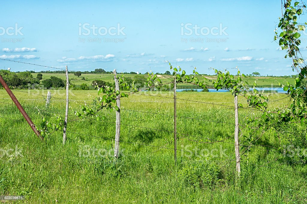 Barbed Wire Farm Fence stock photo