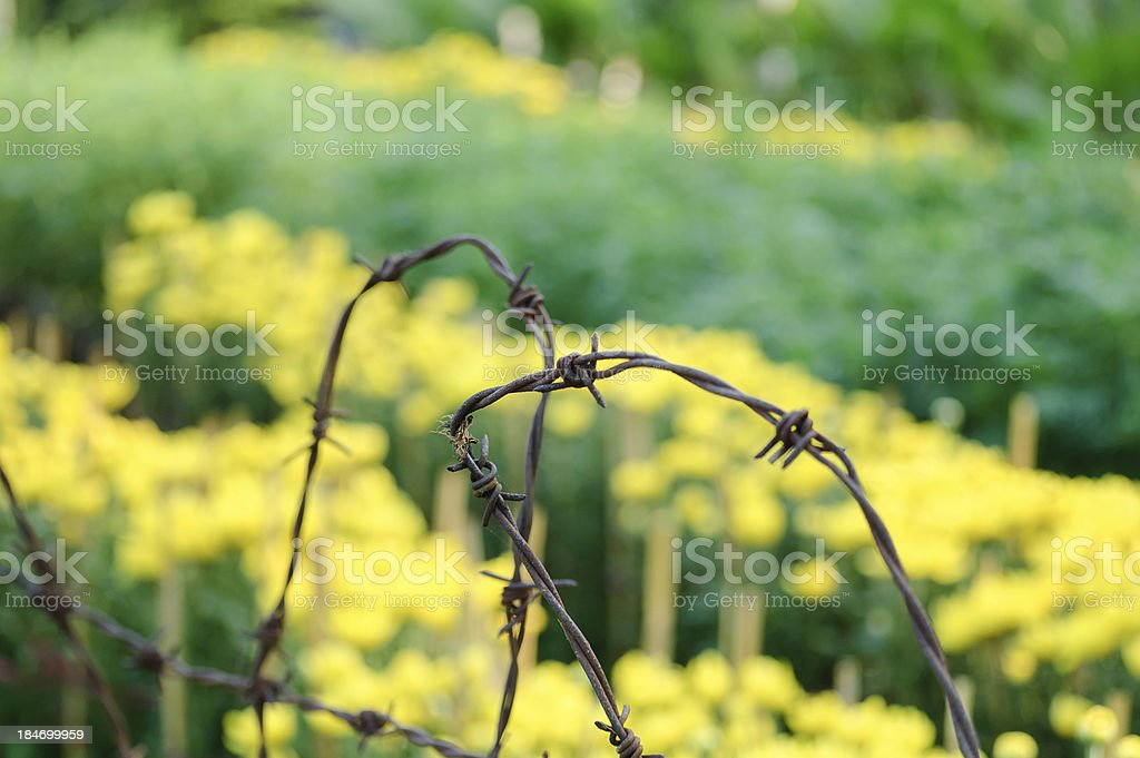 Barbed wire fence and flowers royalty-free stock photo
