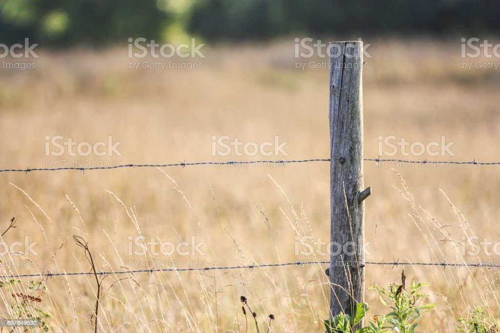 barbed wire fence in a field stock photo