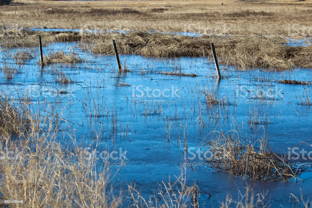 A barbed wire fence silhouette running through a frozen swamp royalty-free stock photo