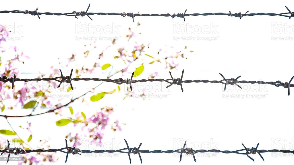 Barbed Wire Fence With Flower Background stock photo | iStock