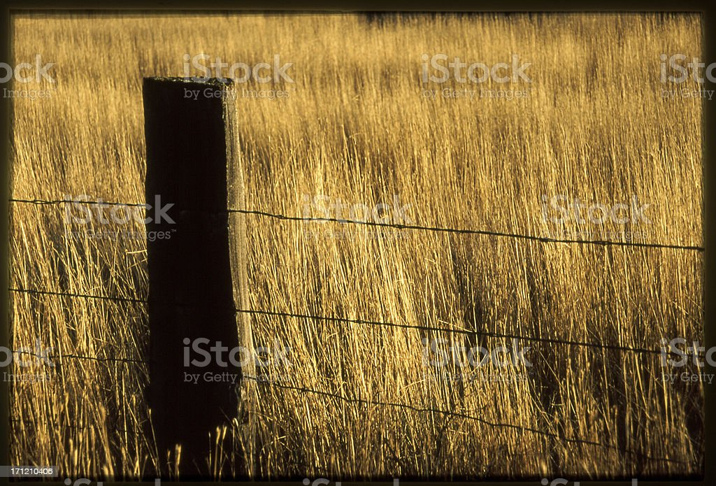 Barbed Wire Fence with Hay royalty-free stock photo