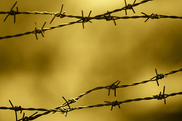 Royalty Free Barbed Wire Pictures, Images and Stock Photos ...
