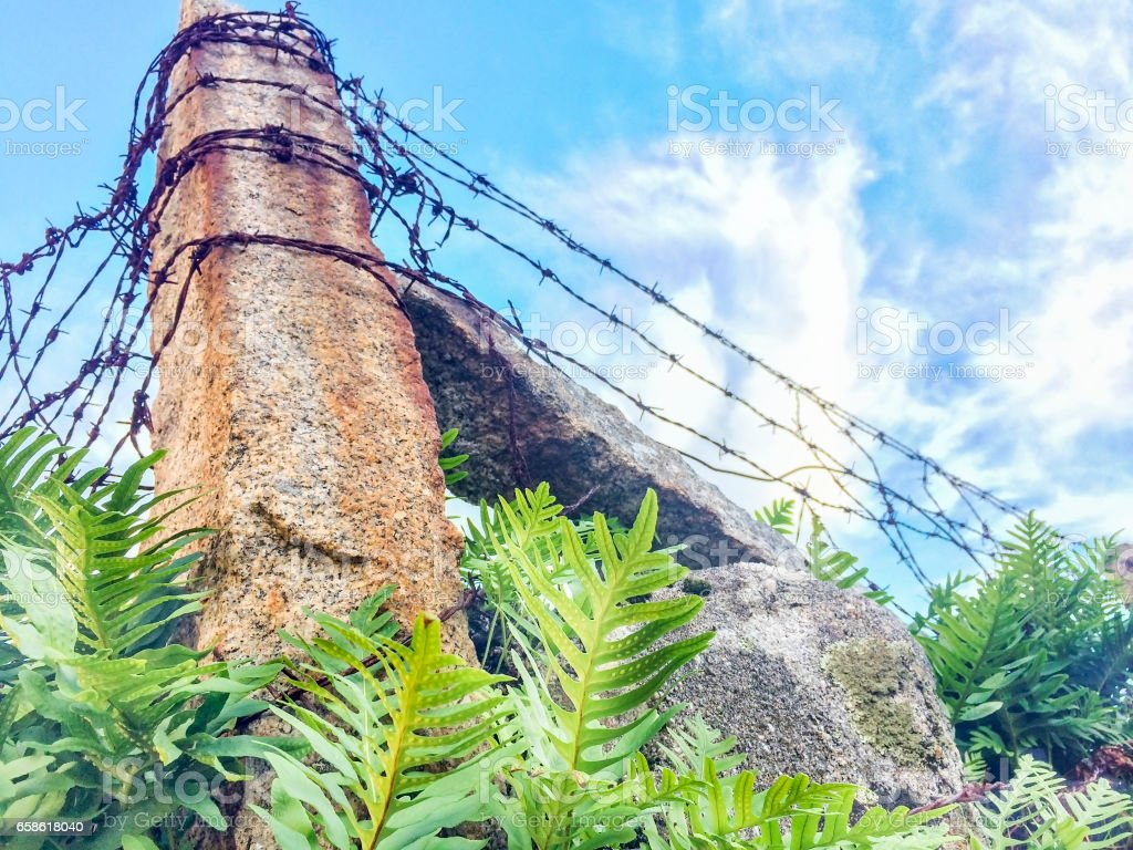 Barbed wire fencing royalty-free stock photo