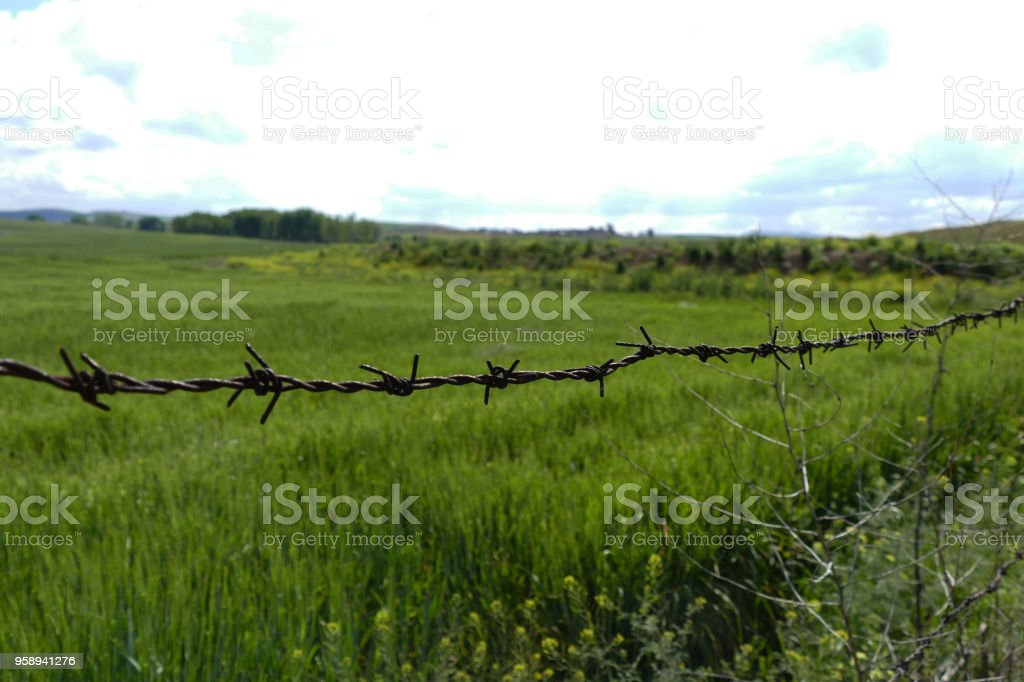 barbed wire mesh, rusty barbed wire, stock photo