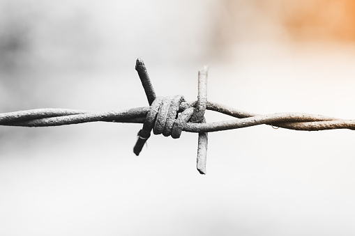 istock barbed wire. Monochrome 533228892