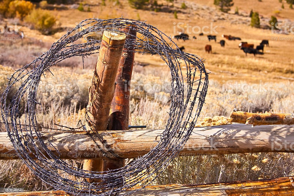 Barbed Wire on Wooden Fence royalty-free stock photo