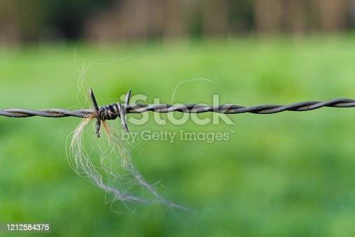 91708255 istock photo barbed wire 1212584375