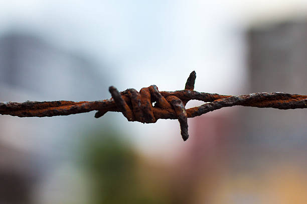 Barbed Wire Rusty barbed wire tetanus stock pictures, royalty-free photos & images