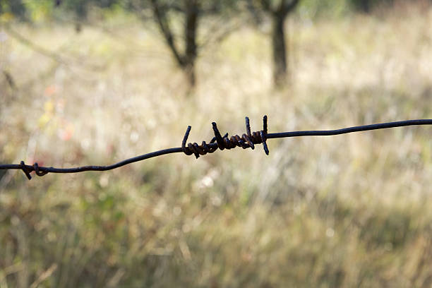 Barbed wire Barbed wire for security strength ensnare stock pictures, royalty-free photos & images