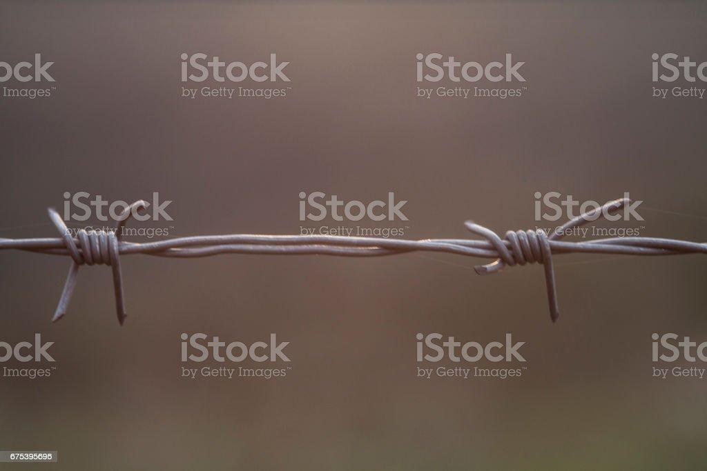 Barbed  wire photo libre de droits
