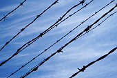 istock Barbed wire, sky in background 1170453641