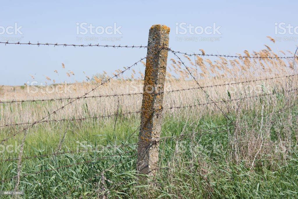 Barbed wire stretched on concrete pillars. The fence royalty-free stock photo