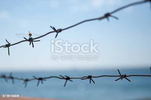 istock Barbed wire with dragonfly and sea 673616908