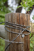 istock Barbed wire wrapped around rustic wood post 1093249786