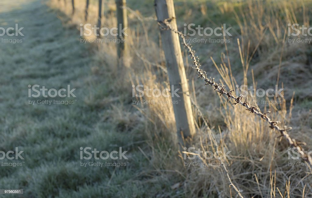 Barbed wired fence royalty-free stock photo