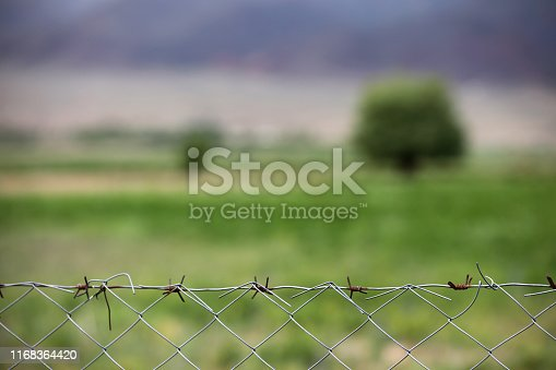 Barbed wires and green tree