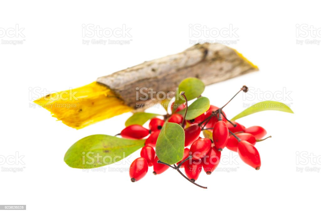 Barberry (Berberis vulgaris) berries, leaves and wood isolated on white background stock photo