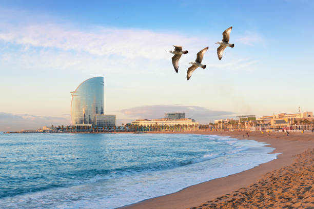Barceloneta Beach in Barcelona with colorful sky at sunrise. Seafront, beach,coast in Spain. Suburb of Barcelona, Catalonia stock photo
