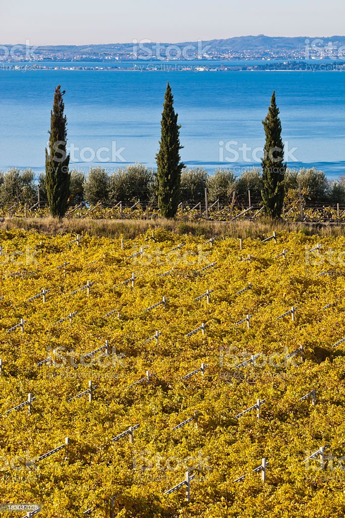 Bardolino Vineyards in Autumn. Lake Garda, Italy stock photo
