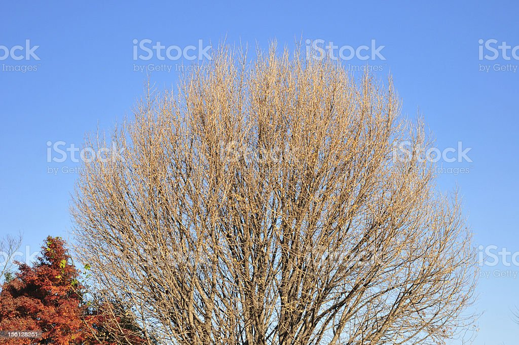 bare branch in autumn royalty-free stock photo