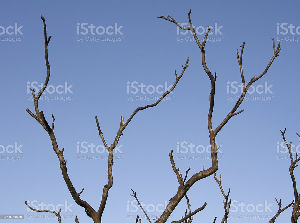 Bare Branches Against a Blue Sky royalty-free stock photo