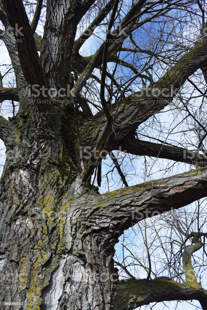 Bare branches of trees. foto de stock royalty-free