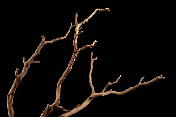 a bare brown branch, silhouetted on a black background  - plantdeel stockfoto's en -beelden