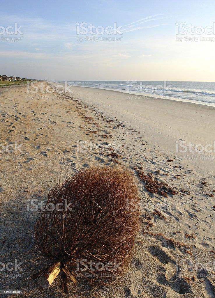 Bare Christmas Tree Left On Beach royalty-free stock photo