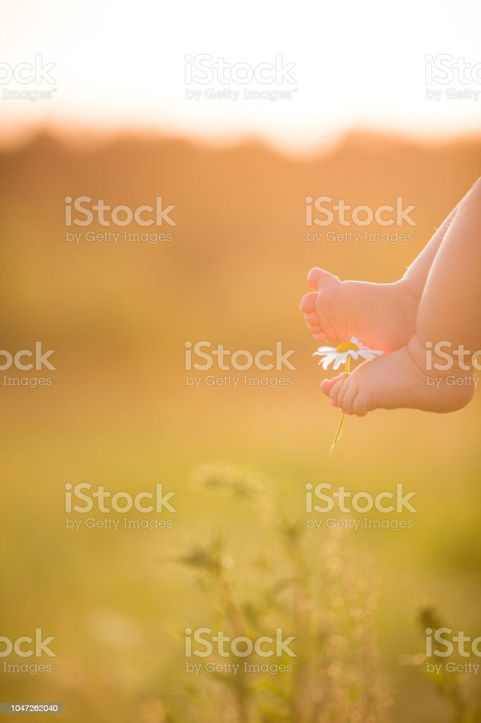 Bare feet of a cute baby on the summer background. Childhood in the farm. Small bare feet of a little baby boy or girl. – zdjęcie