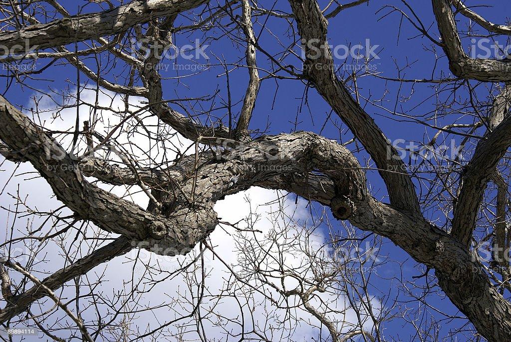 Голое конечностей против winter небо Стоковые фото Стоковая фотография