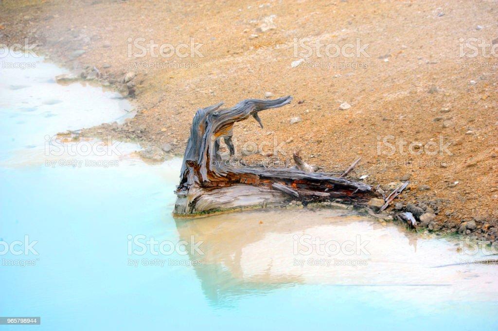 Bare stubbe i paletten Springs - Royaltyfri Blå Bildbanksbilder