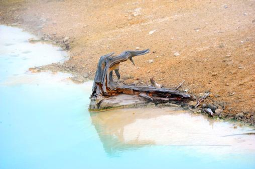 Kale Stomp In Palet Springs Stockfoto en meer beelden van Blauw