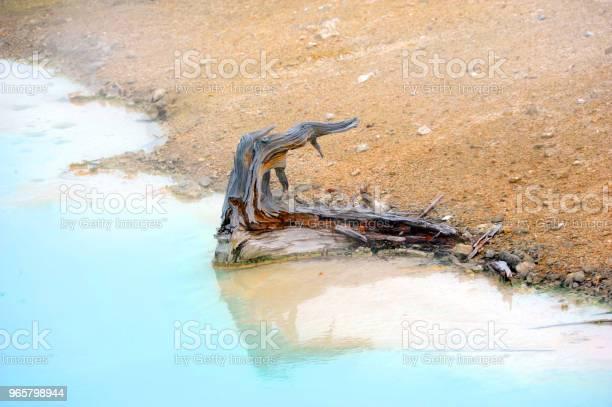 Bare Stubbe I Paletten Springs-foton och fler bilder på Blå