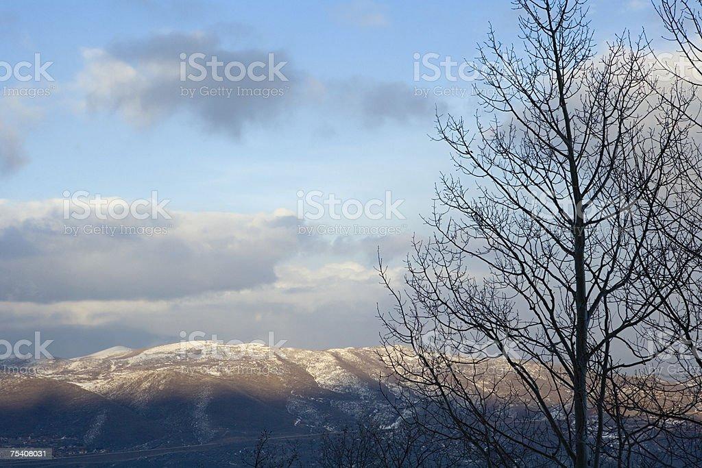 Árvore sem folhagem e Montanha foto de stock royalty-free