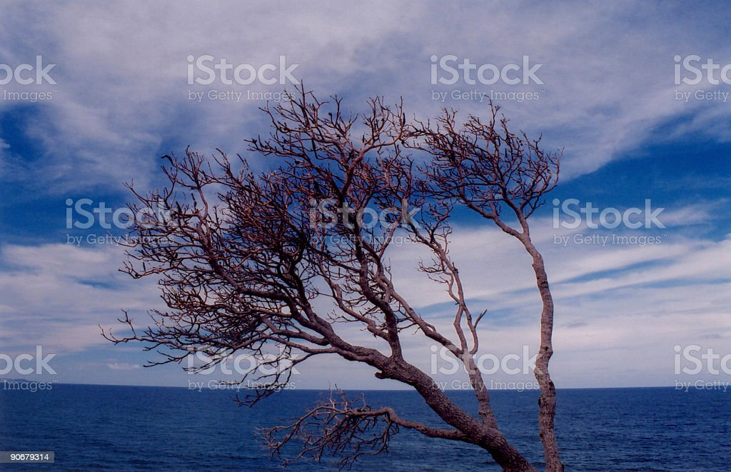 Bare Tree and Ocean royalty-free stock photo