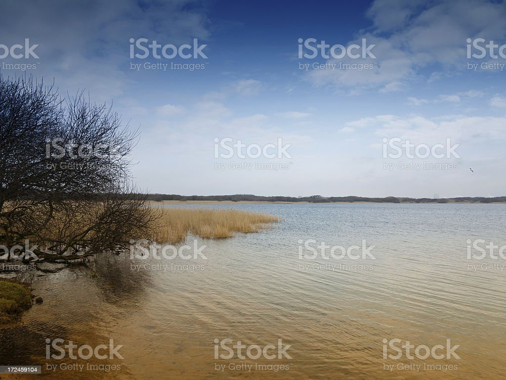 Bare tree at lakeside royalty-free stock photo
