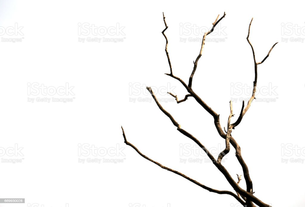 Bare tree branch stock photo