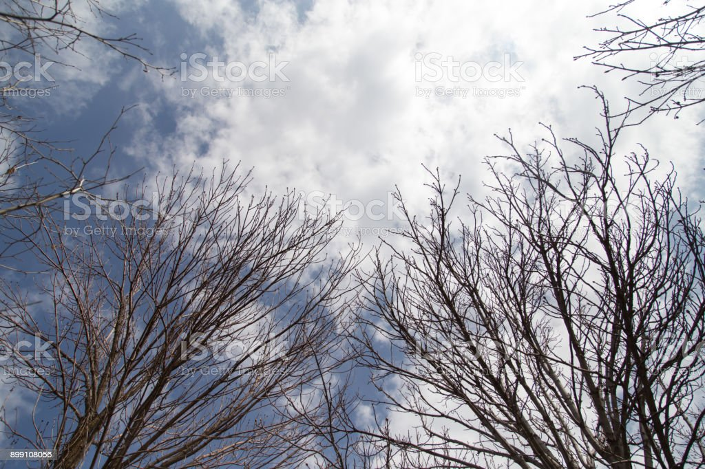 bare tree branches against the blue sky stock photo