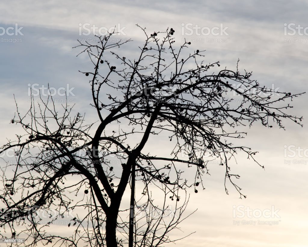 bare tree branches at dawn sun stock photo