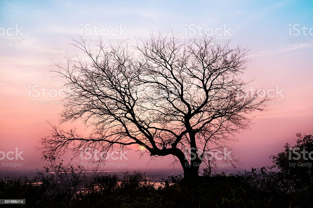 Bare tree branches in sunset glow stock photo