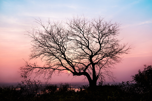 Bare Tree Branches In Sunset Glow Stock Photo - Download ...