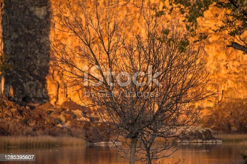 This image shows bare tree branches with beautiful a autumn colored lake landscape behind.