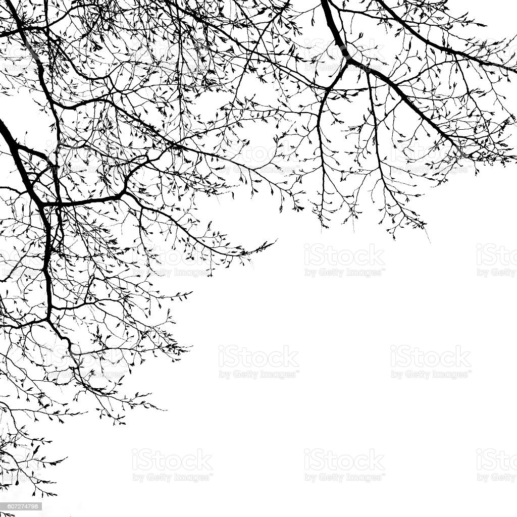 bare tree canopy in winter - Photo
